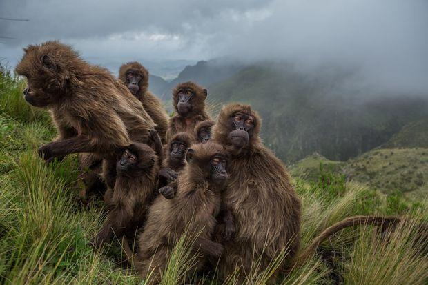 Лучшие фотографии 2017 года от National Geographic 19