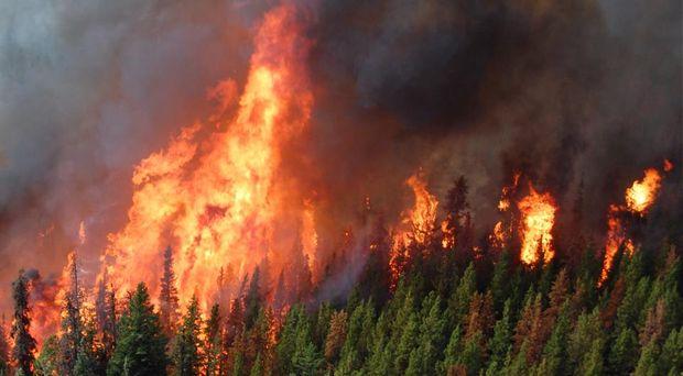 У Британській Колумбії горіло понад 1 мільйон гектарів лісу