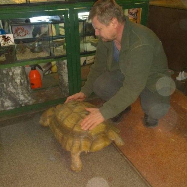 Тварини, черепахи, Іркутськ, втеча, зоопарк, Івушкін
