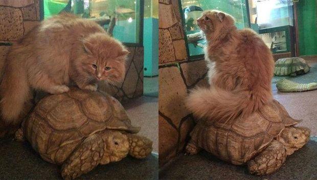 Тварини, черепахи, Іркутськ, втеча, зоопарк, кіт Батон