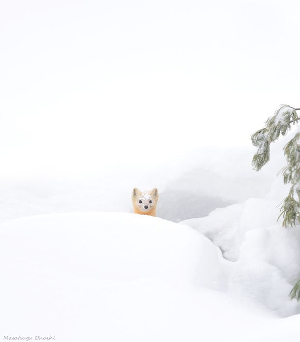 Як тварини радіють снігу