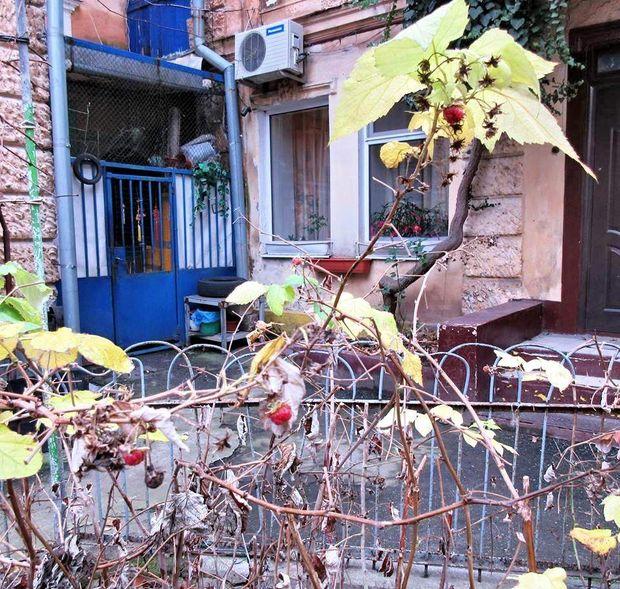 Малина, Одеса, зима, погода