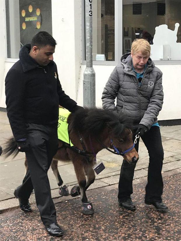 Кінь-поводирь
