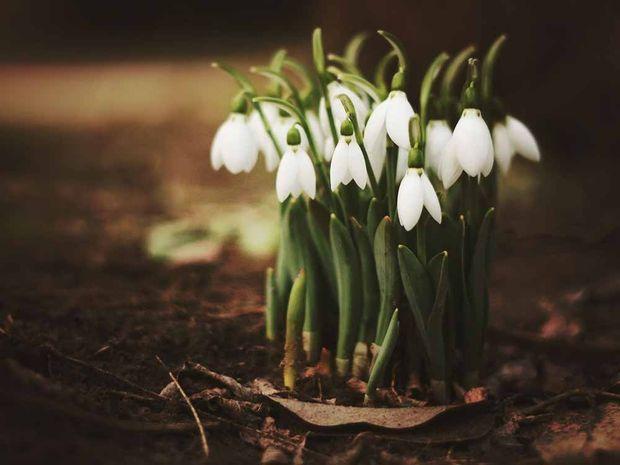 8 березня квіти