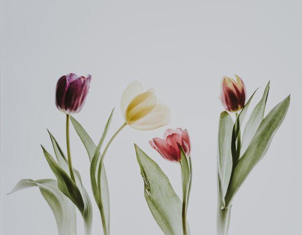 Привітання з 8 березня жінок-колег у віршах