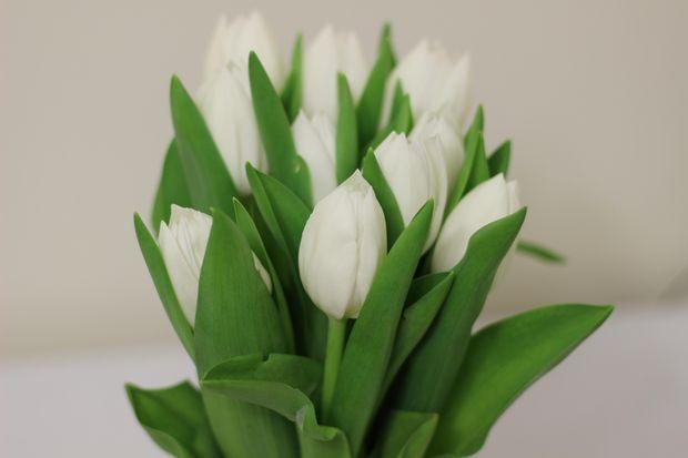 Офіційні привітання жінок-колег з 8 березня
