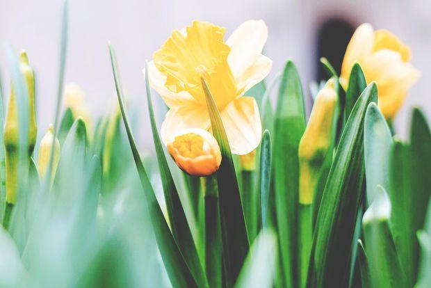Жартівливі привітання жінок-колег з 8 березня