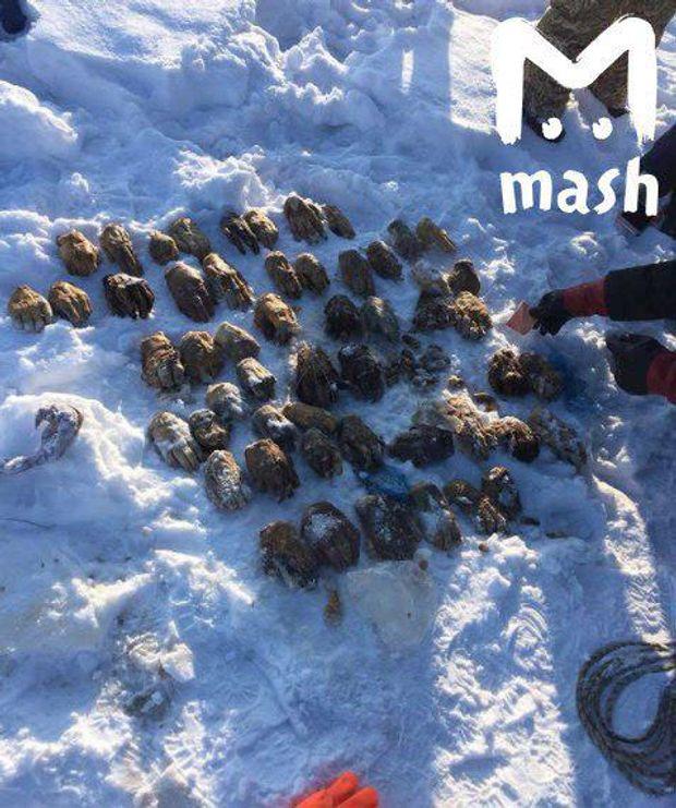 У Росії знайшли мішок з людськими кінцівками