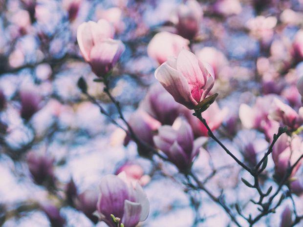 День весняного рівнодення у 2018: дата та традиції