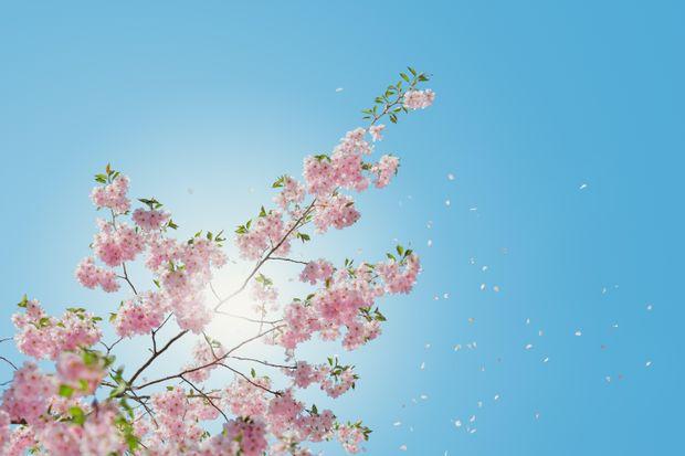 День весняного рівнодення 2018: що потрібно зробити 20 березня