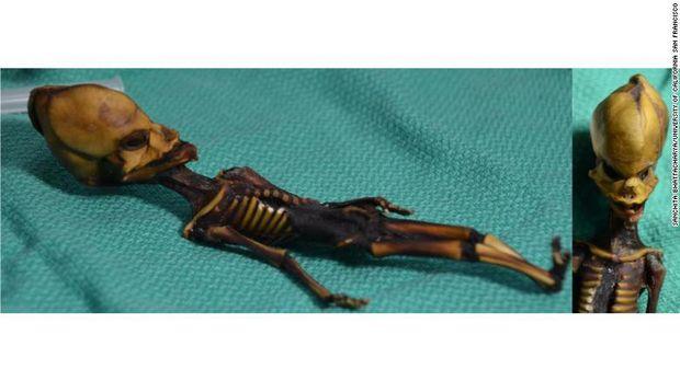 Вчені розкрили таємницю скелета