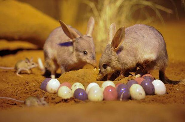 Великдень в Австралії
