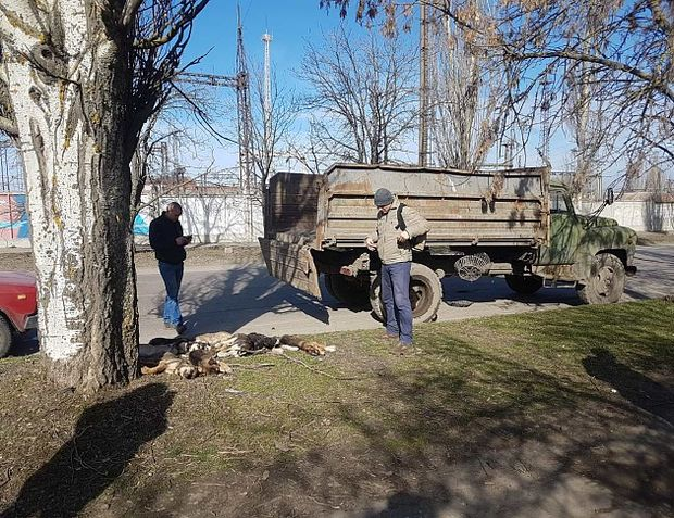 Вбивство собак у Бердянську