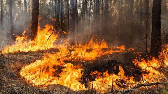 Херсонщина страдает от масштабных лесных пожаров