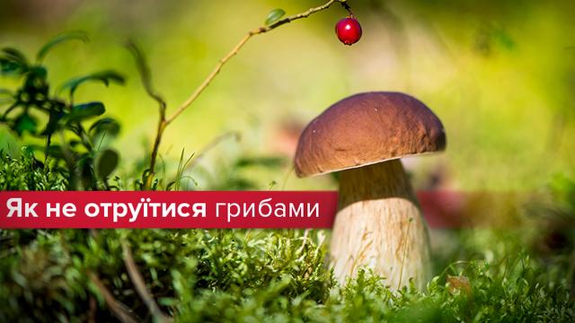 Как избежать отравления грибами: простые советы, которые спасут жизнь